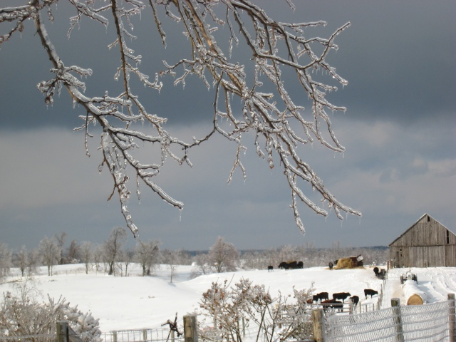 winter storm, January 2009